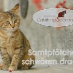 Catsitting Saarland - Mobile Katzenbetreuung