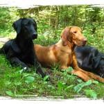Hundeschule - Pension Salostowitz