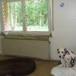 "Hundepension ""Lingner Pfotenhof"""