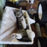Heikes Katzenhotel