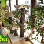 Cats' Castle Katzenresort Montabaur