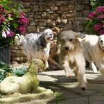 Hundehotel Platzhirsch