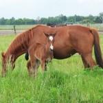 Pferdeparadies Freienhagen - die Pferdepension
