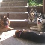 Dogs Resort Hundehotel und Hundeschule