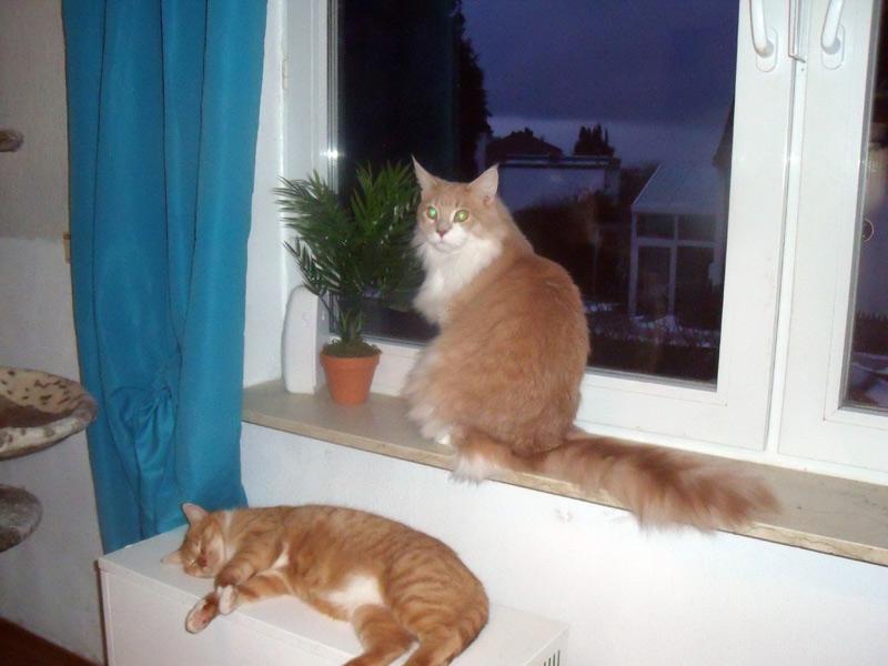 Katzenpension Samtpfote - die 1. Wellness-Oase in